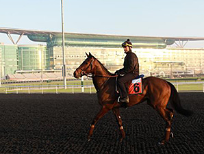 Catcall jogs at Meydan March 24, 2014.