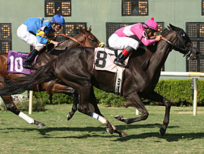 Category Seven wins the 2010 Shishkabob.