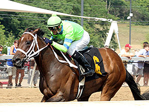 Caviar N Champagne wins the Vivacious Handicap.