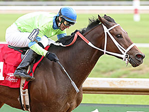 Caviar N Champagne wins the 2014 Best of Ohio Distaff Stakes.