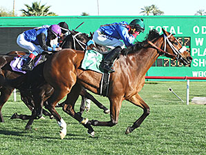 Cavour wins the 2015 Turf Distance Series Final Stakes.