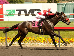 Celebrity Status wins the NTRA Stakes.