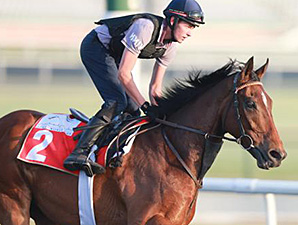 Certerach jogs at Meydan March 24, 2014.