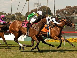 Charlie Em wins the 2013 Senorita Stakes.