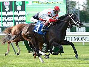 Charming Kitten wins the 2014 Belmont Gold Cup Invitational.