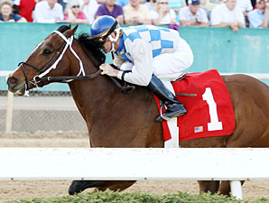 Chief Of Affairs in the 2011 Hot Spring Stakes.