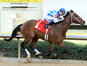 Chief Of Affairs wins the 2011 Hot Spring Stakes.