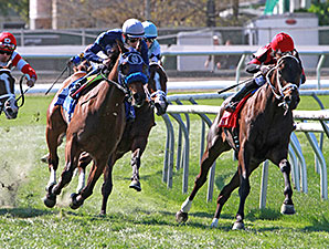 Chocolate Ride wins the 2015 Mervin H. Muniz Jr Stakes.