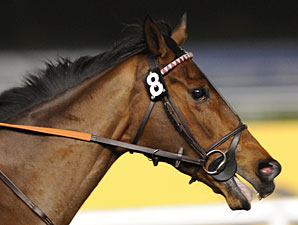 Cirrus Des Aigles in the Dubai Sheema Classic.