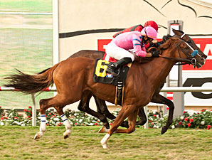City to City wins the John C. Mabee Stakes.