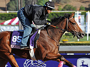 Clenor - 2013 Breeders' Cup, October 29, 2013.