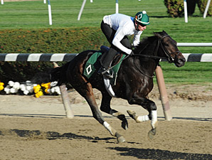 Close Hatches Works at Belmont Park on October 26, 2013.