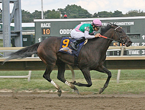 Close Hatches wins the 2013 Cotillion.