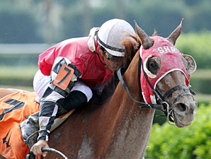 Close It Out wins the 2013 Champali Stakes.