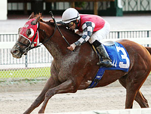 Close It Out wins the 2012 Jack Dudley Sprint Handicap.