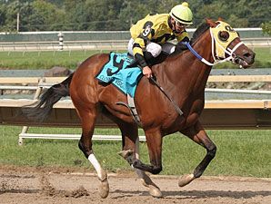 Closing Vision wins the 2012 Marshall Jenney Handicap.
