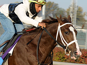 Coalport in a Breeders' Cup work Oct. 30th, 2011.