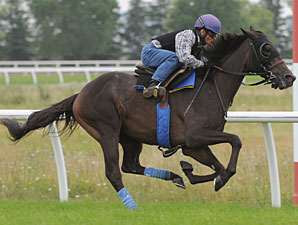 Cognashene at Woodbine on August 13, 2010.