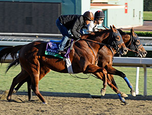 Coil and Capital Account work at Santa Anita 10/29/2012.