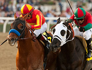 Coil wins the 2013 San Pasqual Stakes.