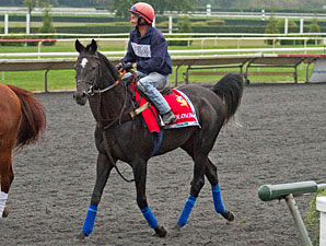 Colombian at Arlington Park.