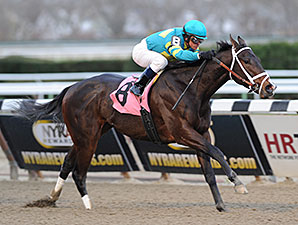 Comandante wins the New York Stallion Series - Thunder Rumble.