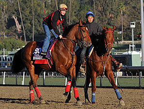 Commander preps for Breeders Cup at Santa Anita, 2013