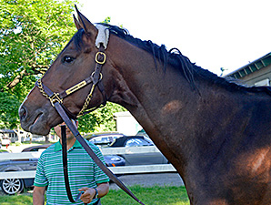 Commaind Curve at Belmont Park June 2, 2014.