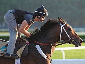 Commanding Curve - Belmont Park, June 3, 2014.