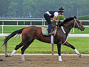 Commanding Curve - Belmont Park, June 4, 2014.