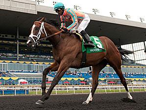 Conquest Tsunami wins the 2014 Colin Stakes.