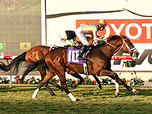 Conquest Typhoon wins the B. DeMille Stakes.
