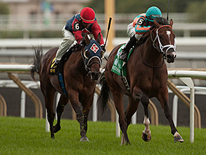 Conquest Typhoon wins the 2014 Summer Stakes.