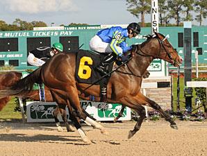 Cor Cor wins the 2012 Sandpiper Stakes.