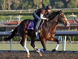 Courageous Cat 2009 Breeders' Cup