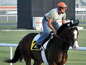 Courageous Cat preps for the 2010 Dubai Duty Free.