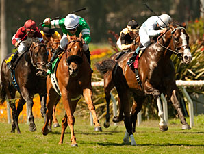 Courageous Cat wins the 2011 Shoemaker Mile.