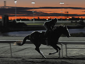 Courageous Cat - Woodbine, September 16, 2011.