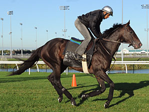 Court Vision at Woodbine on September 17, 2010.