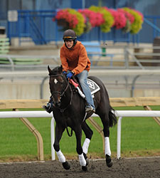 Court Vision - Woodbine, 09/17/11