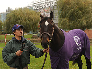 Court Vision - Woodbine, 11/26/11
