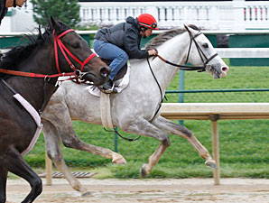 Cozzetti works towards the preakness 5/14/2012