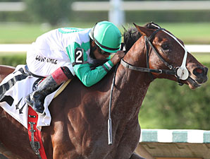 Csaba wins the 2012 Tropical Park Derby.