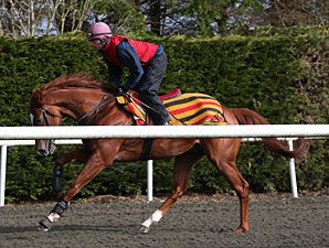 Daddy Long Legs at Ballydoyle, 4/29/2012