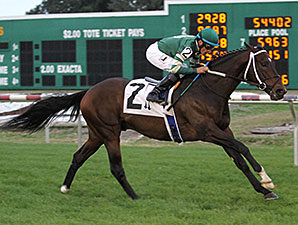 Daddy Nose Best wins the 2013 Buddy Diliberto Memorial Handicap.