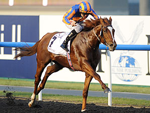 Daddy Long Legs in the UAE Derby.