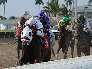 Dad'z Laugh wins the 2014 Big Drama Stakes.