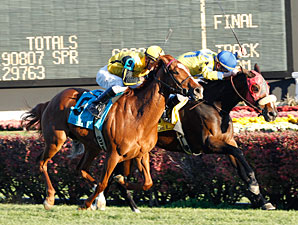 Daisy Devine wins the 2012 Cardinal Handicap.