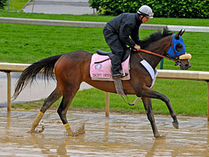 Daisy Devine working at Churchill Downs.
