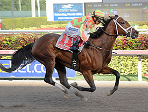 Dame Dorothy wins the 2015 Florida Sunshine Millions Distaff Stakes.